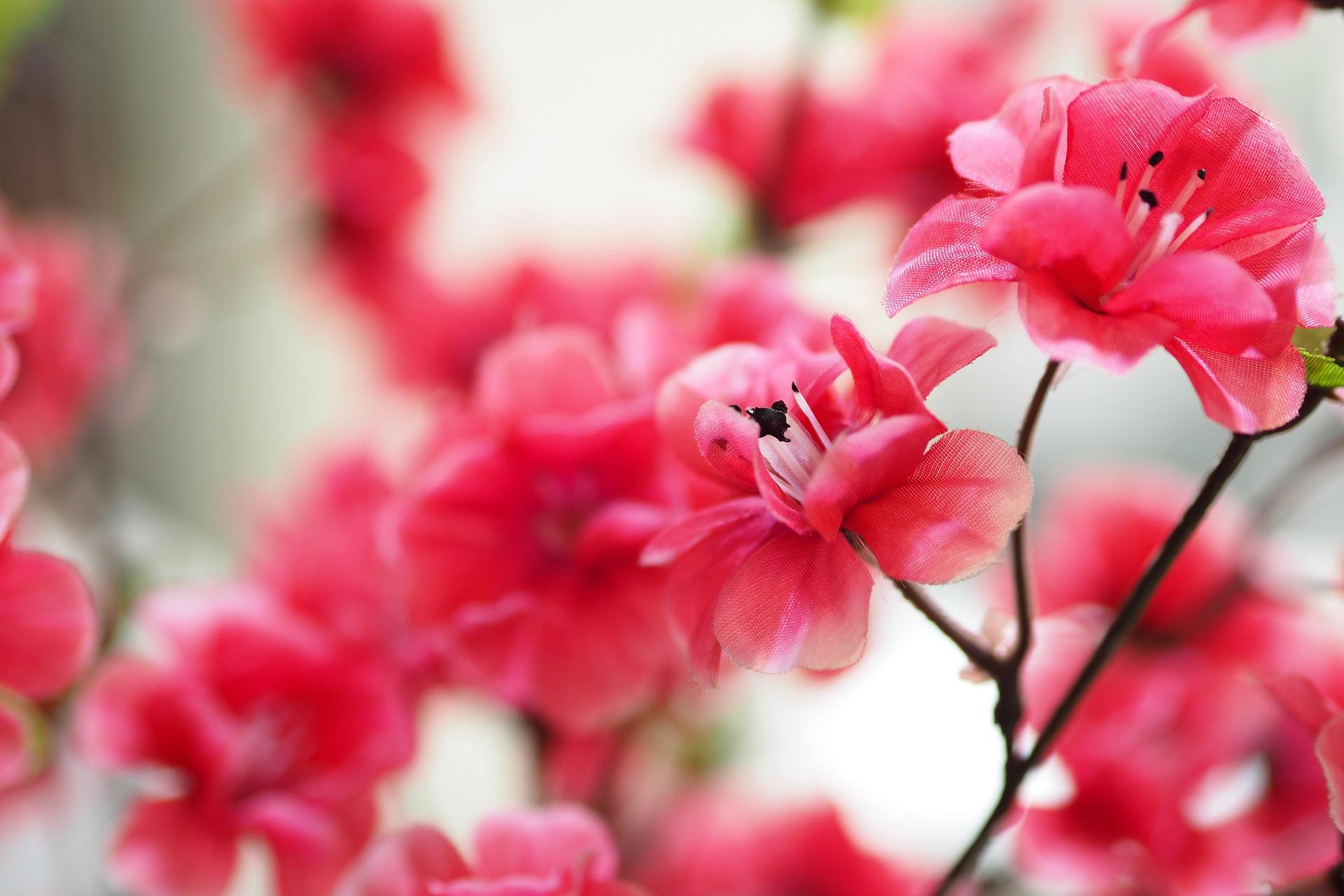 Jak wykorzystać sztuczne kwiaty?